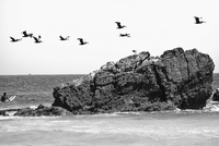 Flying birds and surfers, Malibu, Los Angeles County, California