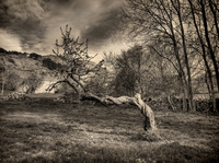 Barren trees and heavy clouds in black and white
