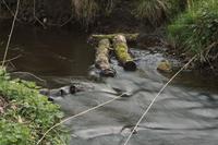 Trunks lying in river