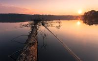 Fallen tree in lake, Poland