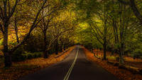 Autumn forest at Mount Wilson, New South Wales, Australia