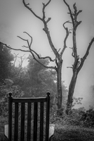 Back of chair, and tree on foggy day