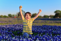 Little boy (6-7) laughing in bluebonnet flowerbed, Texas, USA