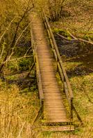 Bridge in forest, Rabenstein, Germany