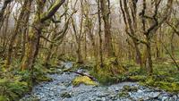 Moss covered rainforest, New Zealand
