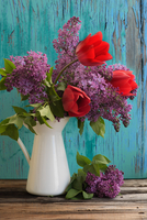 Tulip (Tulipa) and Lilac (Syringa vulgaris) bouquet