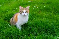 Cat sitting in green grass