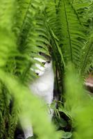 Cat in ferns