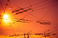 Electricity cables at sunset, San Francisco, California, USA