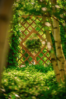 Wooden wall in garden 11098049103  写真素材・ストックフォト・画像・イラスト素材 アマナイメージズ