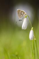 Butterfly resting on white flower