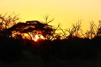 Bare trees against setting sun, Botswana