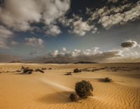 Clouds over desert with bushes, Corralejo, Spain