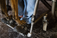 Dog paws on human feet