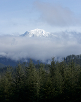 Mountain and forest in mist, Seattle, Washington State, USA