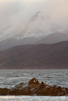 Resting sealions, Patagonia, Argentina
