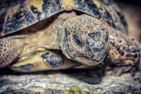 Close up portrait of turtle