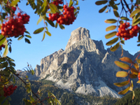 Sassongher mountain peak of Dolomites surrounded by rowan fruit, Corvara, South Tyrol, Trentino-Alto Adige, Italy