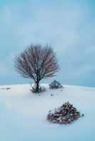 Barren tree surrounded by snow