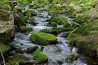 Moss covered rocks around stream, Nejdek, Karlovy Vary Region, Czech Republic