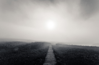 Boardwalk in marsh in mist and moody weather in Kushiro Shitsugen National Park, Hokkaido, Japan