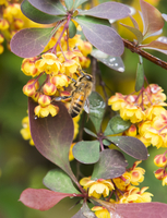 Close up view of bee pollinating flower