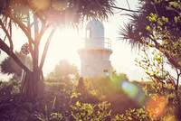 Fingal Head Light between tropical trees, Tweed Coast, New South Wales, Australia