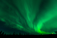Green aurora borealis at night, Fairbanks, USA