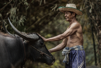 Middle-aged man standing with wild water buffalo (bubalus arnee), Thailand