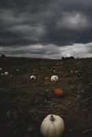 Dark clouds over pumpkin field, Omaha, Nebraska, USA