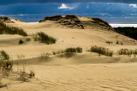 Sand dunes on beach of Curonian Spit National Park, Lithuania