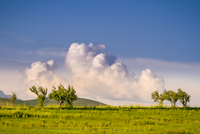 Fluffy cloud over green trees and meadow on plain, Tajikistan
