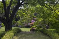 Bridge in garden, Tokyo, Japan