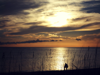 Silhouette of man sitting at Gulf of Mexico at sunset, Florida, USA