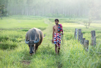 Portrait of man walking with buffalo and holding him on rope, Thailand