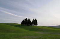 Cypress trees on rolling hills of Valdorcia, Siena, Tuscany, Italy