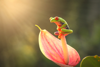 Frog on flower in sunlight