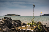 Seascape with Little Ross island and lighthouse, Kirkcudbright, Dumfries and Galloway, Scotland, UK