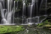 Waterfall and moss, Elakala Falls, Black Water State Park, West Virginia, USA