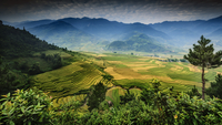 Asian rice paddies surrounded by mountains, Tule, Mu Cang Chai District, Vietnam