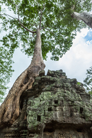 Ta Prohm temple ruins, Angkor, Siem Reap, Cambodia