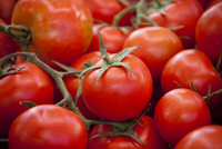 Close-up of red tomatoes, Valencia, Spain
