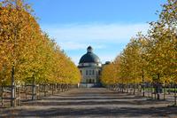 Tree alley leading to Drottningholm, Stockholm, Sweden