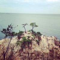 Pine trees over sea, Korea