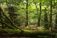 Fallen tree in forest, Hesse, Germany