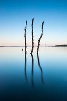 Three branches sticking out of blue lake, Itaipu lake, Santa Terezinha de Itaipu, Parana, Brazil