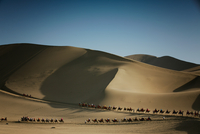 Camel train in desert, Dunhuang, Gansu, China