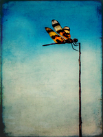Dragonfly on stick against sky