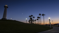 Silhouette of palm trees by footpath, Long Beach, California, USA