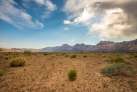 Desert with cliffs in background, Red Rock Canyon National Conservation Area, Las Vegas, Nevada, USA